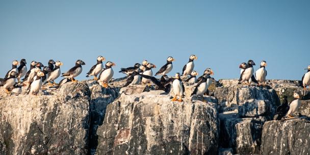 Farne Islands, UK.
